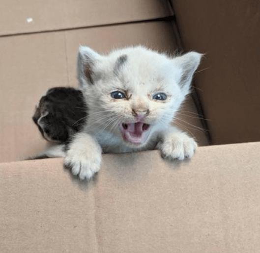 倉庫の作業員の悲痛な投稿。『母猫に置き去りにされた子猫が居ます。誰か助けてもらえませんか。』