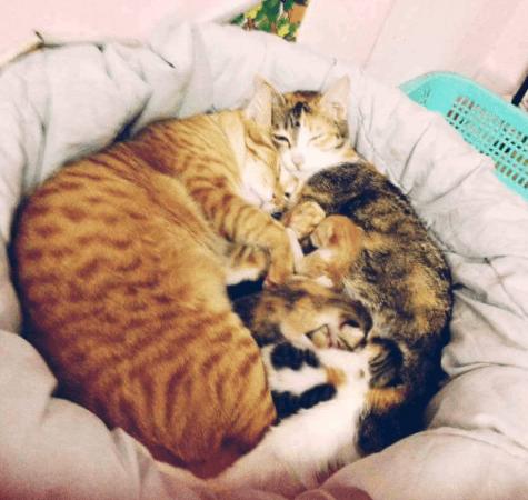 私の猫のはじめての出産に父親の猫が立ち会って・・・世界中の人を感動させた完璧なイクメンぶり