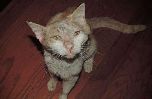 獣医さんもショックを受けるほどボロボロに傷だらけの野良猫。ある女性の家の庭へ迷い込んだ結果…