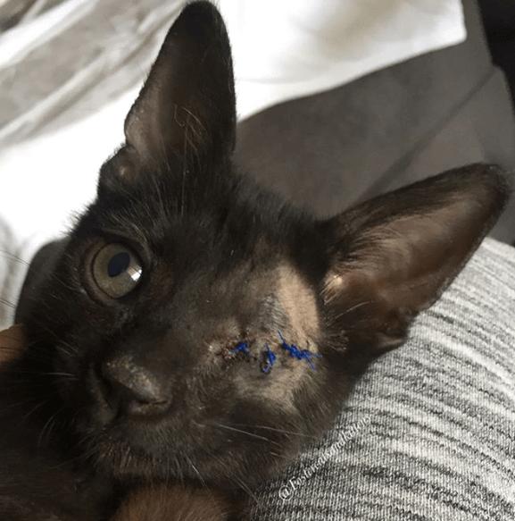 灼熱の通りで保護された生後1か月の子猫。24時間体制のお世話を協力し合う里親のカップル