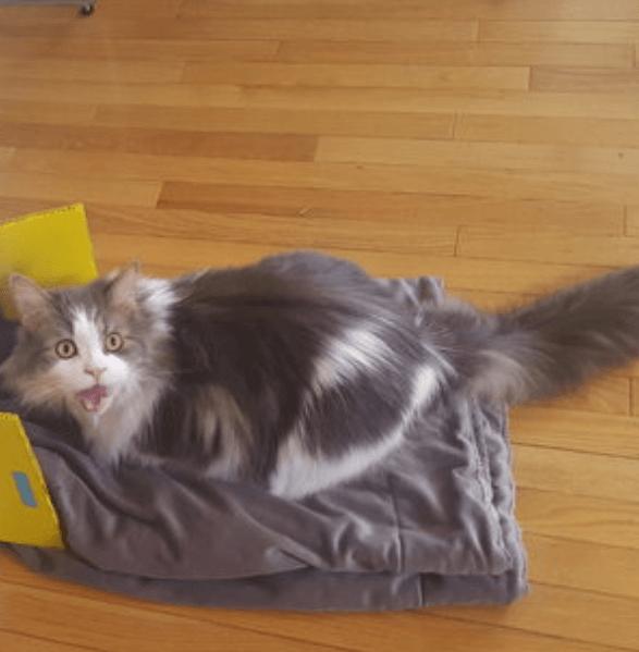 気に入ったオモチャになかなか出会えない私の猫はお昼寝が大好き!だから最高のお昼寝をプレゼントしよう♪