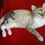 散歩から帰ったうちの子猫が背中に動物の赤ちゃんを乗せて帰ってきた。1歳にもならない彼女はママの代わりをするつもりだ