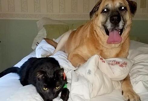 自宅の火事で亡くなったと思われていた愛猫。2ヵ月後に猫と親友だった愛犬が見つけ、奇跡の生還!