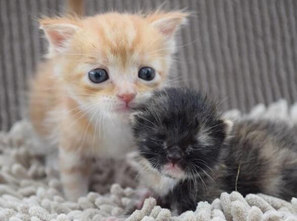 火事の家から救出された5匹の子猫たち。危険な状態から必死で生き抜いて寄り添い、お互いに愛情を注ぎ合う姿に涙…
