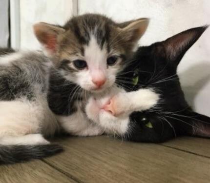 助けを求めた出産間近の母猫。保護され無事出産すると強い母性愛で我が子と保護子猫を分け隔てることなく愛情を注ぐ姿に感動した!