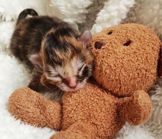 早産だったため生まれてくる子猫が次々と亡くなる。そんな中でたった1匹だけ生き残った未熟児の子猫は…