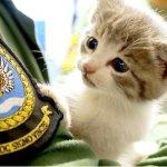 イギリス海軍のイケメン大尉の車に潜り込んで483kmも移動した子猫。無事に保護されると海軍のマスコットに?!