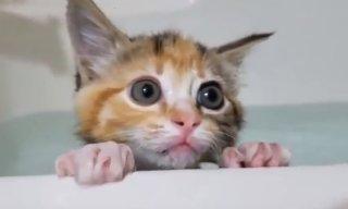 水 嫌い 猫