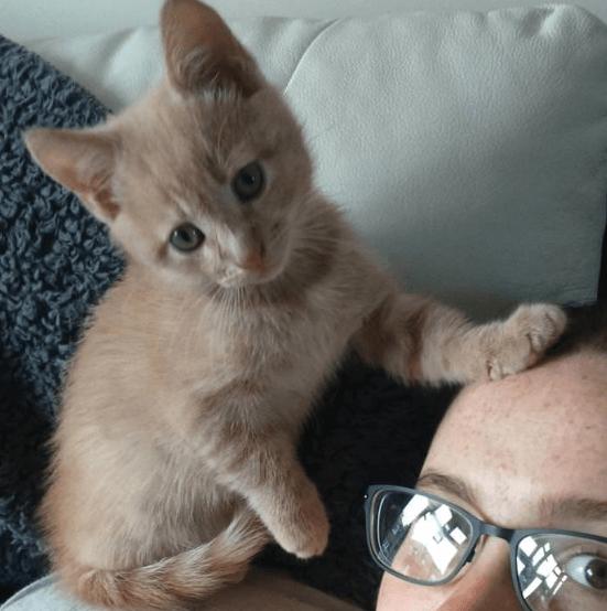 心臓病を抱えて生まれた赤ちゃんがママのお腹でキックを始めたとき、抱きついて守り始めた小さな子猫