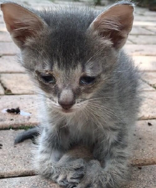 曲がった前足で一生懸命に助けを求め近づいてきた子猫。保護されて2週間後に見せてくれた表情に胸が熱くなった…