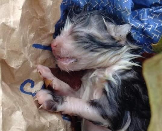 雨降る寒い日の路上で発見された子猫。生まれたばかりでへその緒がついたまま固まり動かなかった。せめて埋めてあげようとすると…