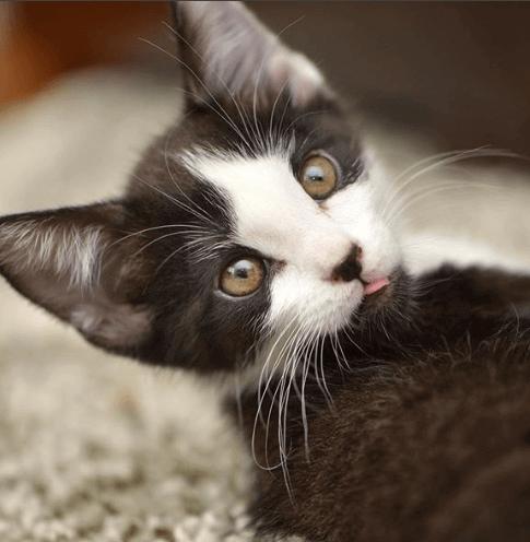 初めて会ったとき起き上がるのが精いっぱいだった子猫は1か月後、名前を呼ぶと走ってくるようになった
