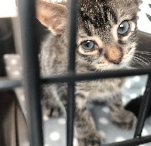 瀕死の状態から3か月、永遠の家へ旅立ったアスファルトの上で真夏の日差しに焼かれていた生後数日の子猫