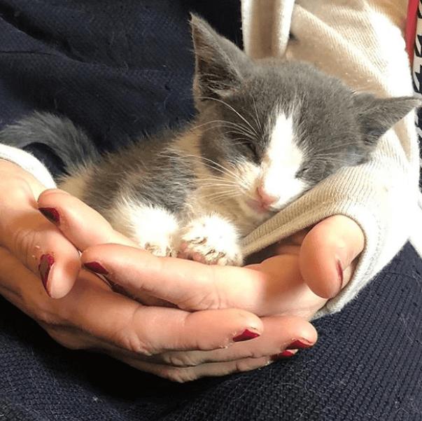 ハイキルシェルターに収容された盲目に生まれた生後1か月の野良猫。駆けつけたボランティアの女性に抱きついて・・・