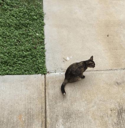 誰かにチーズバーガーの残りをもらったらしい・・・職場の外に出たら小さな子猫が私の足に摺り寄ってきた