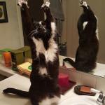 とりあえずやってみるのが猫というもの。そこに○○があったから・・・『私の猫の奇妙な行動』
