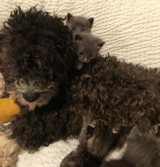 我が子と離ればなれになってしまったママ犬がどんどん落ち込んでしまう・・・保護されてきた子猫たちのお世話をお願いしたら