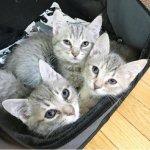 子猫が無料?!ただならぬものを感じた女性。車を止めて3匹の子猫たちに手を差し伸べると…