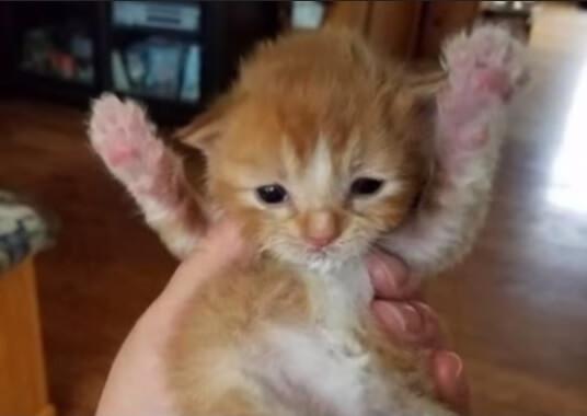 驚愕!病院の女子トイレに置いてあったショッピング袋の中から子猫の鳴き声が…中を見ると19匹もの子猫が捨てられていた!