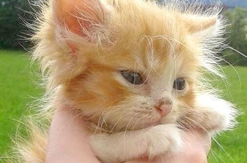 森の中でお腹を空かせて泣き叫んでいた子猫。偶然そばを通りかかった夫婦に保護されると驚くほどの美猫に成長した♡