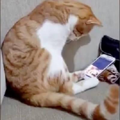 涙腺崩壊!いつまでも亡くなった飼い主さんを想い続ける猫。ビデオの中に飼い主さんの姿を見つけた猫の姿がせつなすぎる…