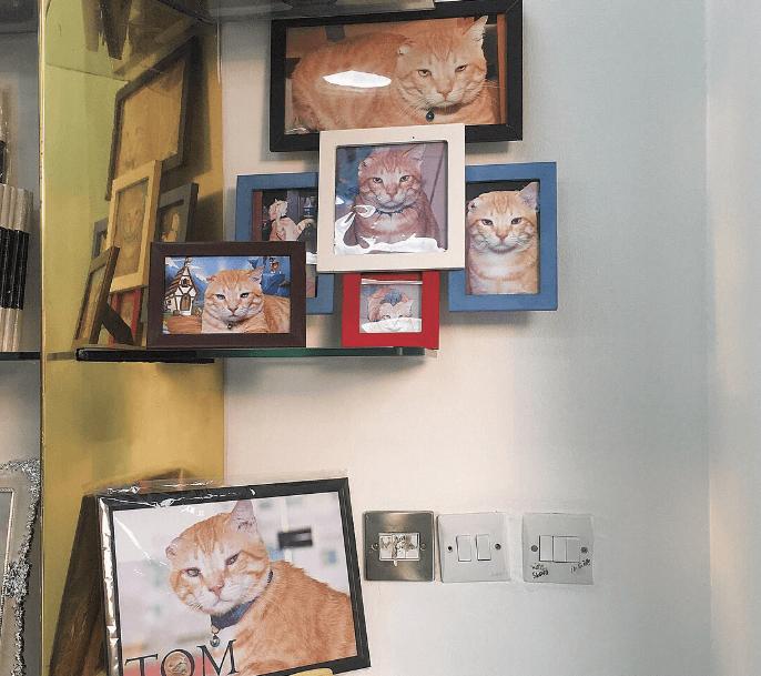 最近私の行きつけに加わった父の家の近所にあるプリントショップには、壁一面に飾られた猫の写真があるの