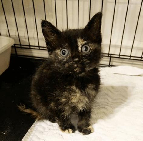 『ダウンタウンで見つけたの。この子を助けてもらえない?』仕事中の同僚が路地から救った声を失った小さな子猫