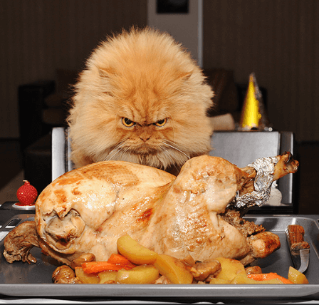 いつも『ダメ』って言われるけど。とりあえず手に入れずにはいられない、美味しいものと好奇心が大好物の猫たち