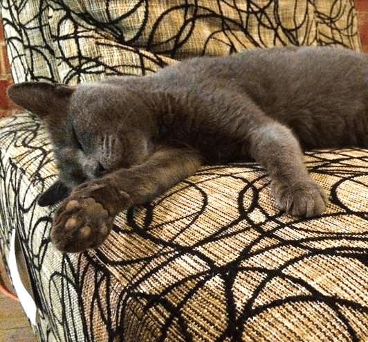 2年前、厳しい寒さが来る前に自宅の傍で暮らしている小さな野良猫を迎え入れたカップルに訪れた最高の冬