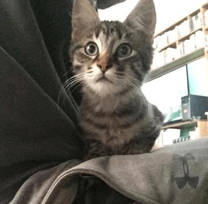 『野良猫が僕を選んだんだ。連れて帰ってもいいかい?』4匹の猫と暮らす婚約者と私は5匹目の猫と出会った