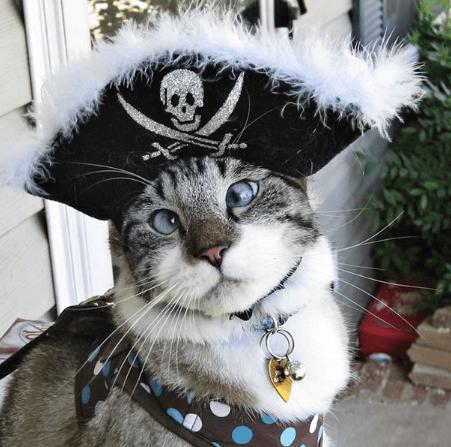 悪霊退散には逆効果?・・・ひらめきと創造力を駆使した渾身の1枚。Halloweenを彩る猫たち