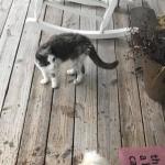 『私も中に入れて』月曜日の朝、散歩中の愛犬の後を追いかけてきた猫が玄関のドアを引っ掻いて助けを求めてきた