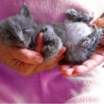 ひとりぼっちで死んでしまったの?かわいそうに思って触れてみると・・・歩道に横たわり全く動かなかったとても小さな子猫