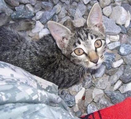 アフガニスタンで任務中の女性兵士。保護した障害のある子猫を連れて帰国しようとした結果…