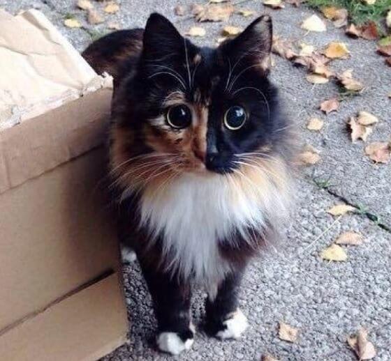 視力を失い路上に捨てられたまん丸の美しい瞳を持つ猫。保護されて優しい女性に出会ったことから運命が一転する!