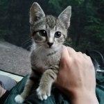 真夜中、キャンプをしていた夫婦の元へ訪れた1匹の子猫。独りぼっちが寂しかったのかそのままテントで眠り始めた…