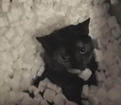 大爆笑!!ダンボール箱の中でくつろいでいた猫。箱の中には大量の発砲スチロールの梱包材が入っていた。猫を出してみると…