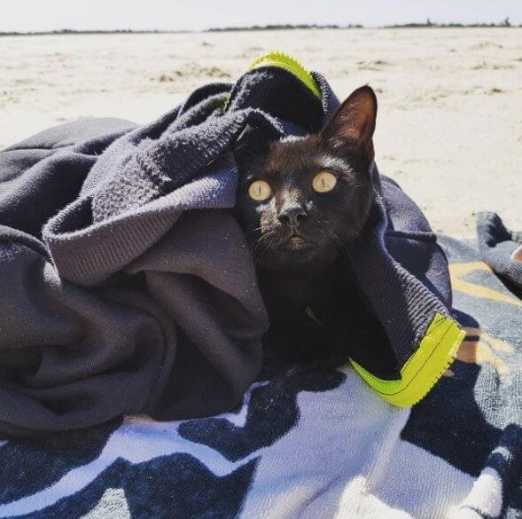 心優しい夫婦に引き取られた保護子猫。驚くほど海が大好きになり飼い主さんを追いかけ波を乗り越えてきた!
