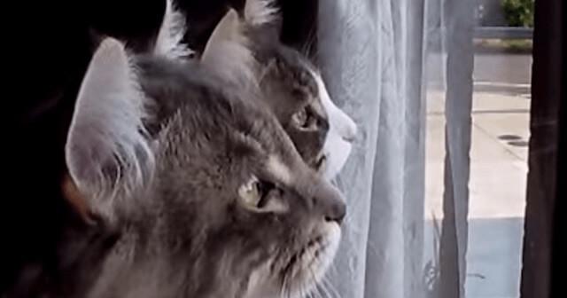窓の外に何が?!いきなり会話を始めた2匹の猫。だんだん激しさを増す様子にビックリ!気になるうww