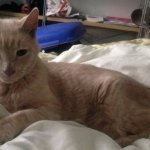 「もしかしてこの子は3年前に失踪した愛猫かも?」動物病院を訪れた親子が保護されている猫を見てとった行動の結果…