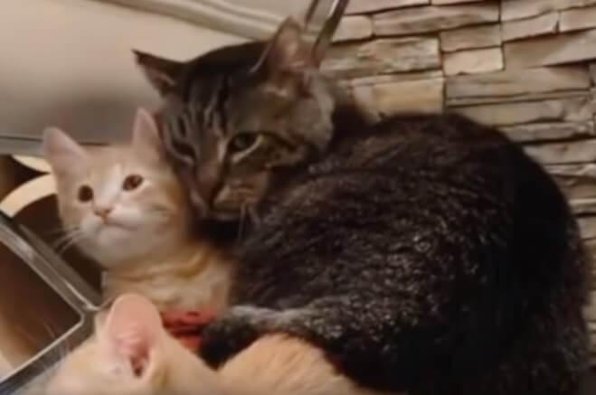 保護された余命わずかな野良の老猫。誰にも懐かず孤高の老猫が出会った子猫たちに愛情を注ぎ生きる力を見出す!