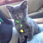 涙腺崩壊!余命数ヶ月と宣告された保護子猫。残された時間を飼い主さんと精いっぱい楽しむ姿に胸が熱くなる…