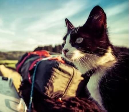 男性が旅の途中に出会った衰弱した野良猫。体が回復すると男性の冒険好きな良きパートナーに変身する!