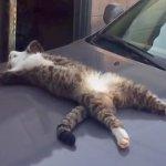 出掛けようと車に乗ろうとしたらボンネット上で大の字になって爆睡中の猫を発見!声をかけてみると…