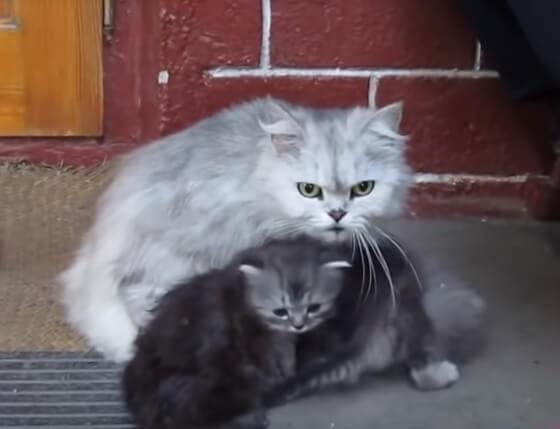 とっても愛情深く、頼もしい母猫たち。その勇敢ぶりが感動もの!でも笑っちゃう♪