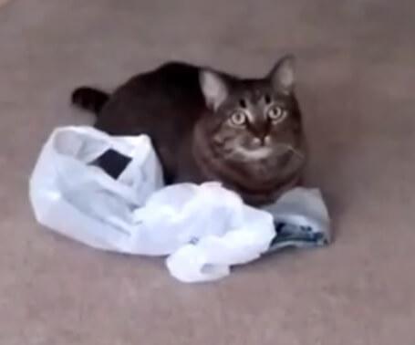 ハッ?!ナ・ナンダ?!ビニール袋のカサカサ音にビビりまくる猫。その真剣な表情に…ごめん、笑った!!