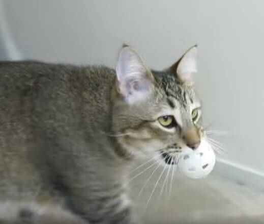 スゴイ!!お腹が空くと家中を歩き回る?飼い主さんの発明した画期的なシステムを見事クリアした賢い猫さんに拍手!