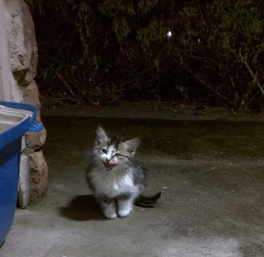 2年前の嵐の夜、自宅の裏手で鳴いていたびしょ濡れの子猫。救ってくれたカップルの家族に加わった数週間後