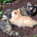 裏庭に棲みついた猫が出産!懐かなかった母猫が我が子のために人間に助けを求めてきた結果…