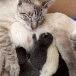 保健所で離れ離れになった猫夫婦。再会すると幸せいっぱいの夢のような展開を見せてくれた猫ファミリーが素敵…